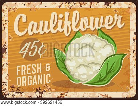Cauliflower, Vegetable Metal Plate Rusty, Cabbage Price Poster, Vector Retro. Farm Food Products, Or