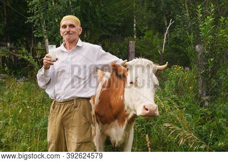 A Man Grazes A Cow In A Green Meadow. Cattle Eat Grass. The Farmer Drinks Milk From A Glass. Healthy