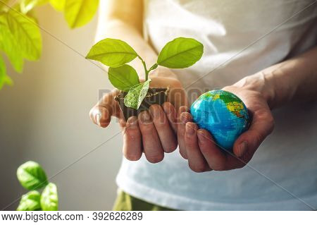 Hands Hold A Green Sprout Of A Tree Sapling In One Hand And A Globe Of Earth In The Other. Concept O