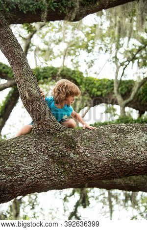 Little Cute Boy Child Climbing On Tree Hight Outdoor Lifestyle Concept