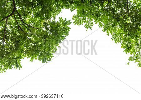 Frame Of Green Leaves Tree On White Background.