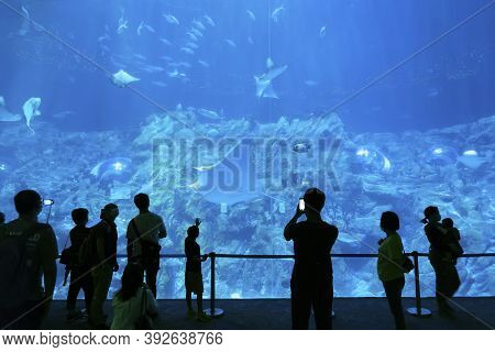 Hong Kong, China - October 30, 2020 : Tourist Watching Big Aquarium In Ocean Park, Hong Kong