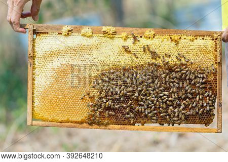 Beekeeping,wooden Beehive And Bees,close Up Of Bees In A Beehive On Honeycomb,bee Smoke Sprayer,blur