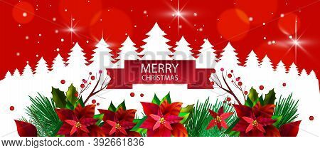 Christmas Winter Floral Background With Pine Trees Outline, Evergreen Border, Red Poinsettia Leaves.
