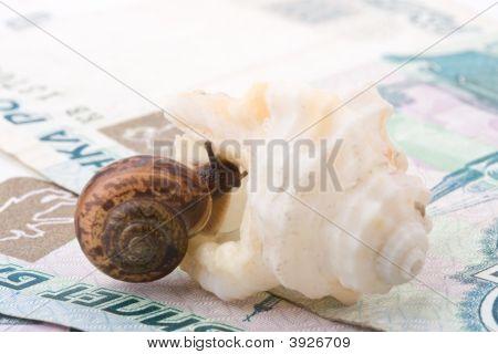 Snail, Sea Shell And Money