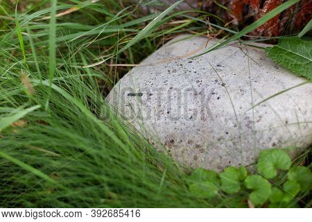 Gray Stone On Green Lawn, Closeup. Stone Texture. Gray Cobblestone.  Big Rock On Ground In Park. Sto