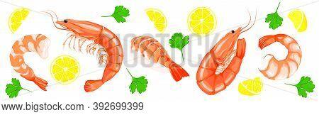 Shrimp Prawn Icons Set. Shrimp, Parsley, Lemon Drawing On A White Background. Collection Shrimp, Shr