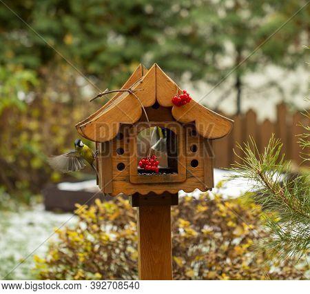 Bird Feeder In Autumn, Autumn Garden Birds Peck Food From Bird Feeder