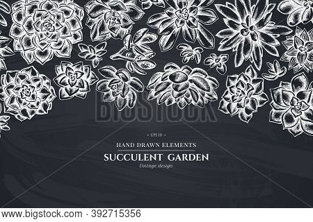 Floral Design With Chalk Succulent Echeveria, Succulent Echeveria, Succulent Stock Illustration