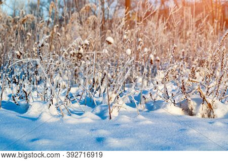 Winter landscape with the snowy winter field and frozen winter plants at sunset, winter field landscape scene, winter nature scene, winter background