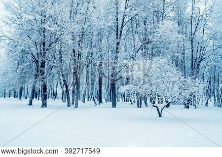 Winter landscape. Snowy wihter trees in the winter park, cloudy winter nature background with winter trees covered with frost, winter park landscape, winter background, snowy winter trees