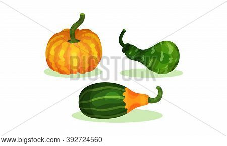 Bright Pumpkin Of Different Shapes And Sizes Vector Set
