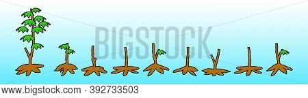 Fresh Cassava And Leaves, Raw Cassava Slices For The Tapioca Starch Industry Or The Ethanol Industry