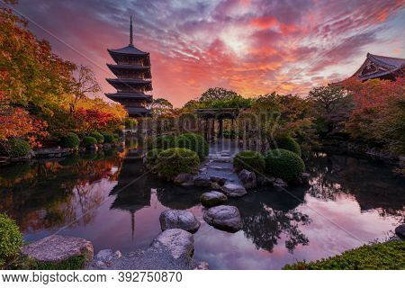 Sunset over ancient pagoda Toji temple in autumn garden, Kyoto, Japan. Tallest wooden pagoda in Japan and Unesco world heritage site.