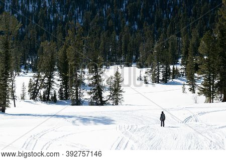 Lonely Man-hiker Walking In The Winter Snowy Forest. Ergaki Mountain Range, Western Sayan Mountains,