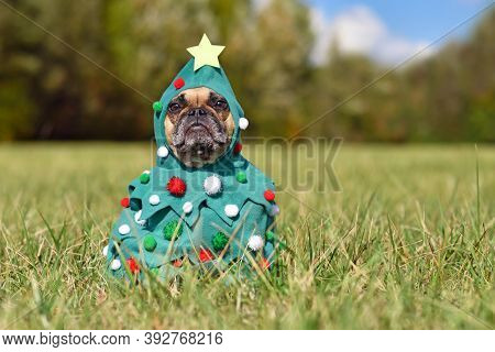 French Bulldog Dog Wearing Funny Christmas Tree Costume With Baubles And Stars Sitting On Grass