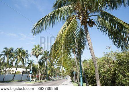 Paradise Island Drive View, The Main Street Surrounded By Palms On Paradise Island (bahamas).