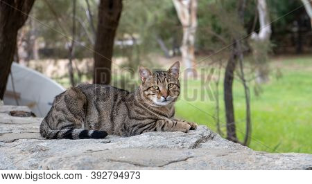 Abandoned Domestic Shorthaired Cat Breed. Blur Nature Background, Banner.