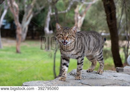 Abandoned Domestic Shorthaired Cat Breed. Blur Nature Background.