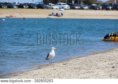 Mission Bay And Beaches In San Diego, California. Usa. Community Built On A Sandbar With Villas, Sea