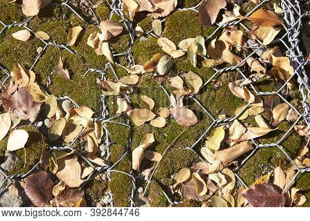 Gabion Covered With Moss And Fallen Autumn Leaves