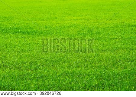 Agriculture Nature Green Grass In The Field Background