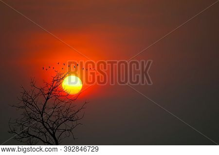 Beautiful Sunset Back Silhouette Birds Flying And Dry Trees In The Dark Red Sky