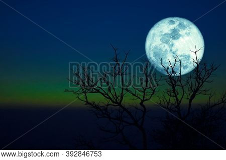 Dying Grass Full  Moon And Silhouette Dry Trees In The Sunset Dark Green Blue Sky