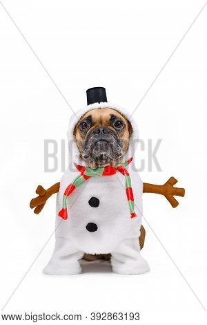 French Bulldog Dog Dressed Up As Funny Snowman With Full Body Suit Costume With Striped Scarf, Fake