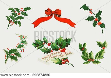 Vintage Christmas holly vector collection