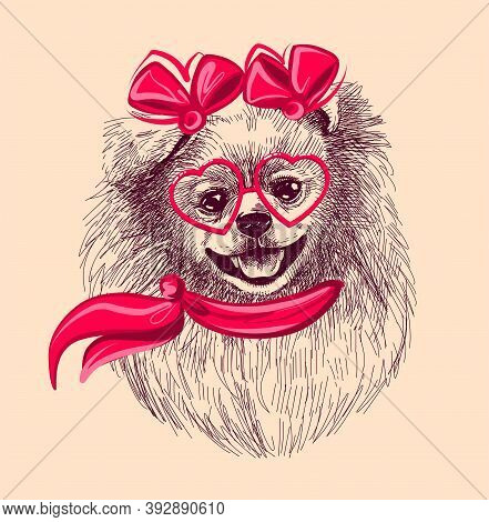 Pomeranian Dog In Fashionable Glasses And Scarf. Print Illustration For T-shirts, Postcards, Etc. A