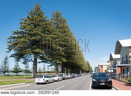 Victor Harbor, Sa, Australia - October 6, 2016: Avenue Of Norfolk Island Pine Trees Over 100 Years O