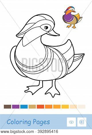 Colorful Vector Template And Colorless Contour Illustration Of A Mandarin Duck. Wild Birds Preschool