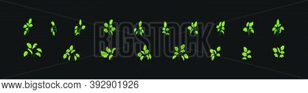 Set Of Cilantro Design Element Cartoon Icon With Various Models. Vector Illustration Isolated On Bla