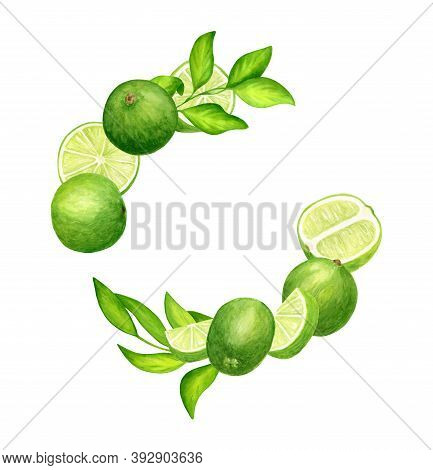 Watercolor Fresh Limes And Leaves Wreath. Hand Drawn Botanical Illustration Of Green Citrus Fruits I