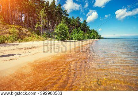 Baltic Sea Coast. Pine Forest On The Seashore
