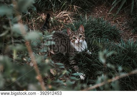 Playful Gray Cat In The Grass. Kitty Playing Hide And Seek In The Garden. Take Lonely Animal Home, A