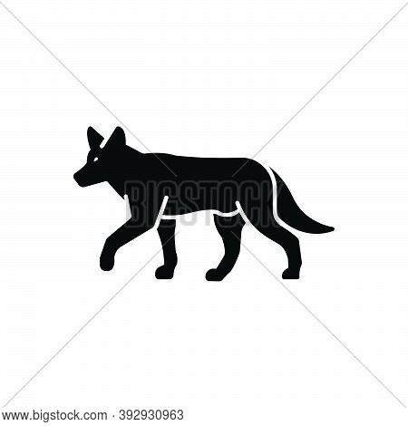 Black Solid Icon For Jackal Cunning Vicious Hunting Howling Shaggy Dingo Omnivores Nature Animal Jun