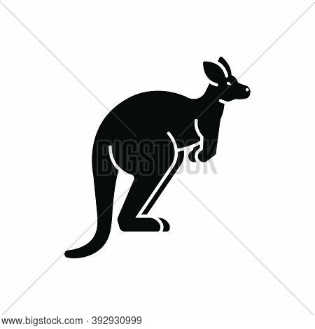 Black Solid Icon For Kangaroo Australia Pouch Jump Mammal Wallaby Herbivorous Nature Animal Jungle W