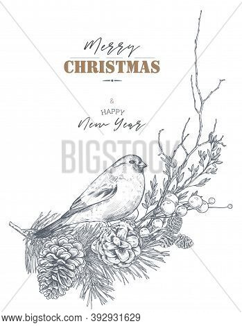 Merry Christmas And Happy New Year Greeting Card With Hand Drawn Winter Plants, Pine Cones, Bird.