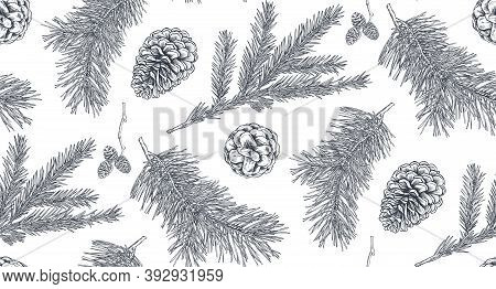 Seamless Pattern With Pine Cones And Branches. Hand Drawn Sketch Vector Illustration.