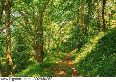Batumi, Adjara, Georgia. Botanical Garden. Lane, Path, Way For Light Walking In Summer Deciduous For