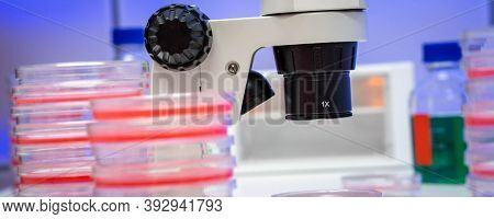 Microscope and petri dish with biological sample on clinical workbench