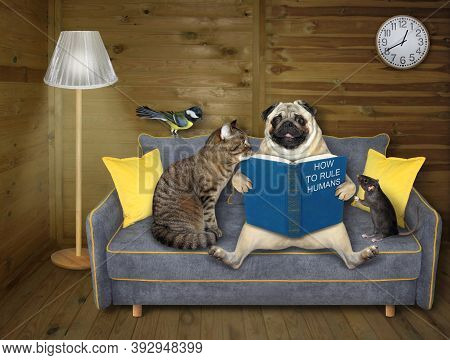 A Family Of Pets Is Reading A Book On A Gray Sofa At Home.