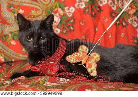 A Graceful Black Cat Lies On A Scarf In The Russian Style With A Red Necklace On Its Neck