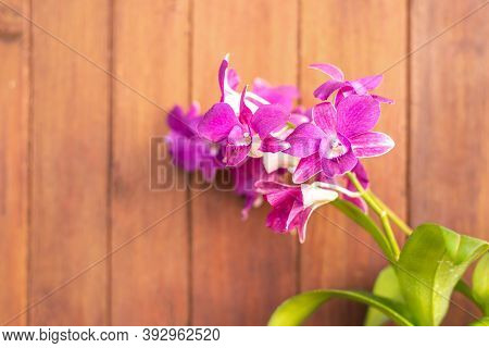 Dendrobium, Purple Orchid, Orchid On Blurred Wooden Background, Abstract Flower Purple Color On Blur