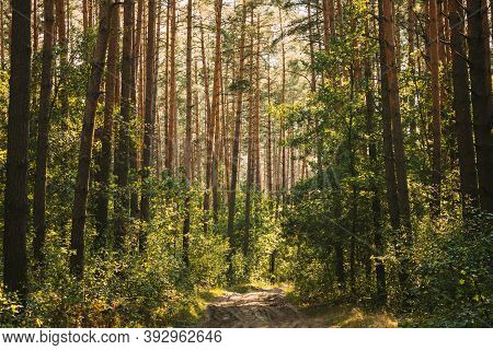 Path, Lane, Walkway, Way In Summer Mixed Forest Between Woods Trees. Beautiful Landscape Of Forest,