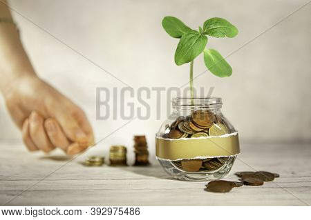 Glass Jar With Coins And A Plant, In The Background A Female Hand Puts Coins Near A Glass Jar. Savin