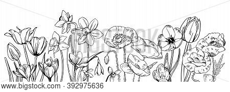 Composition With Wild Flowers In The Row On The Bottom Of The Page. Tulips, Poppies, Narcissuses, Sn