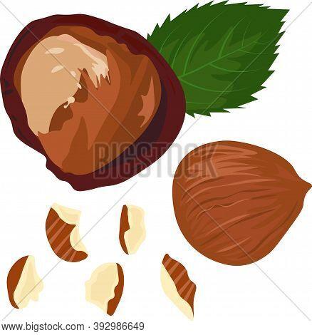 Chopped Hazelnuts Stock Vector Illustration. Hazel We Have This Nucleus Of Whole Hazelnuts. Pieces O